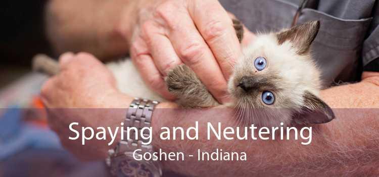 Spaying and Neutering Goshen - Indiana
