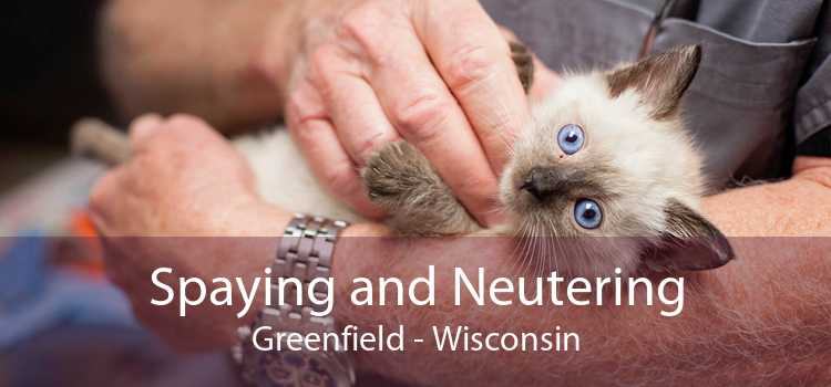 Spaying and Neutering Greenfield - Wisconsin