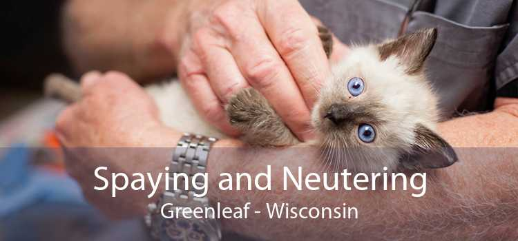 Spaying and Neutering Greenleaf - Wisconsin