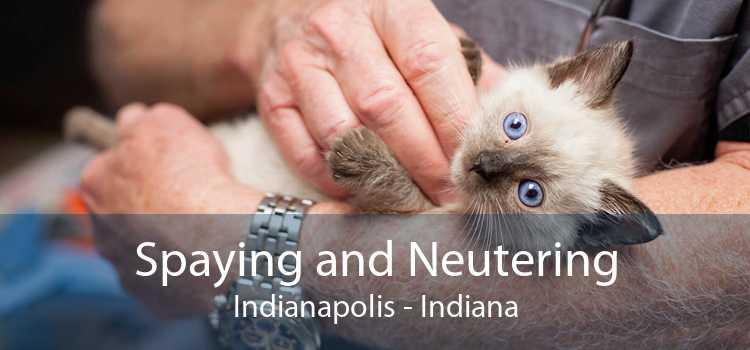 Spaying and Neutering Indianapolis - Indiana