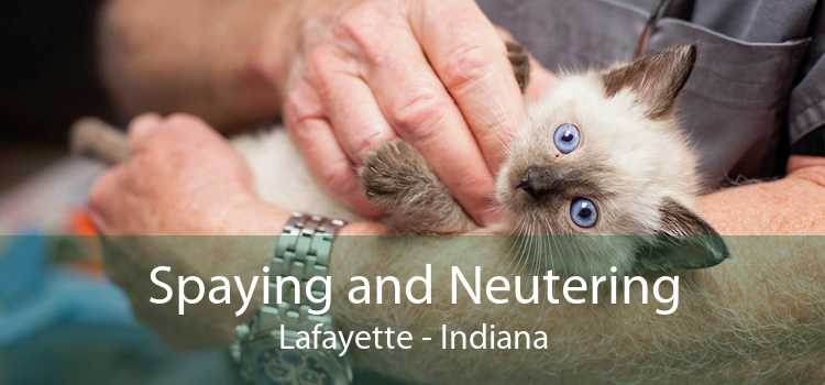Spaying and Neutering Lafayette - Indiana
