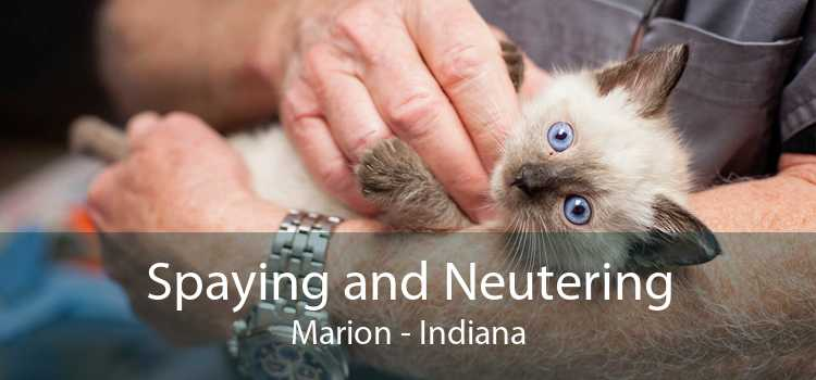 Spaying and Neutering Marion - Indiana