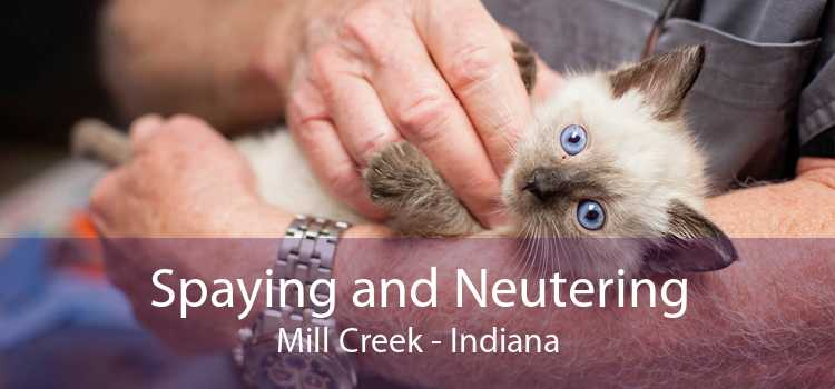 Spaying and Neutering Mill Creek - Indiana