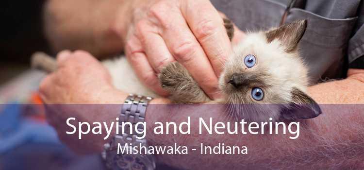 Spaying and Neutering Mishawaka - Indiana