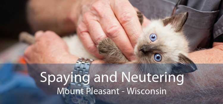 Spaying and Neutering Mount Pleasant - Wisconsin