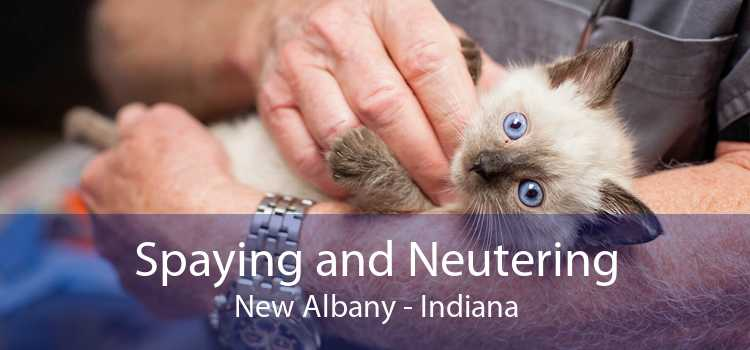 Spaying and Neutering New Albany - Indiana