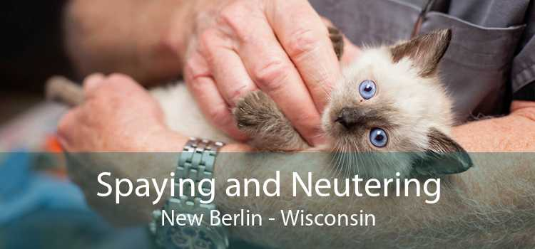 Spaying and Neutering New Berlin - Wisconsin
