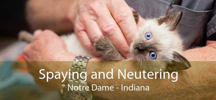 Spaying and Neutering Notre Dame - Indiana