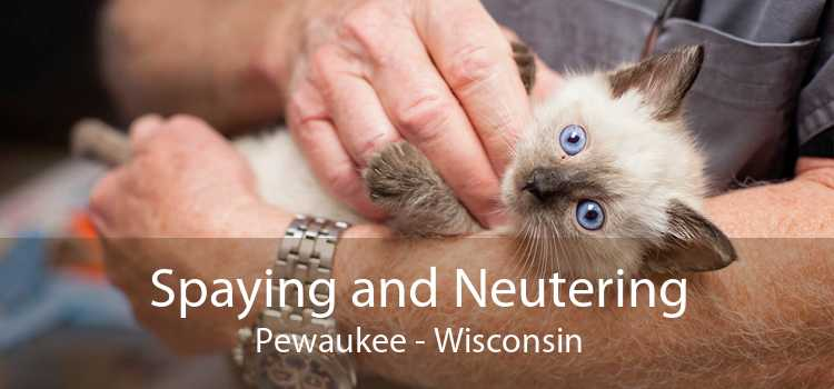 Spaying and Neutering Pewaukee - Wisconsin