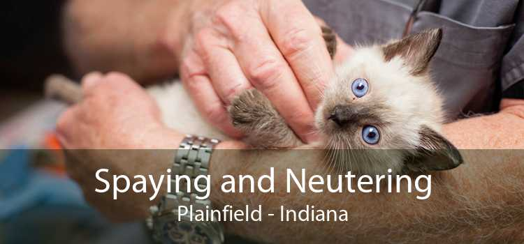 Spaying and Neutering Plainfield - Indiana