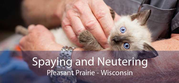 Spaying and Neutering Pleasant Prairie - Wisconsin