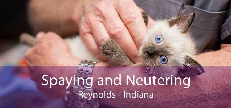 Spaying and Neutering Reynolds - Indiana