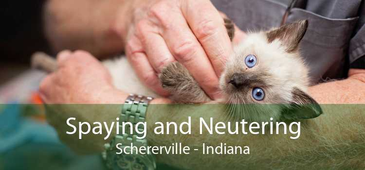 Spaying and Neutering Schererville - Indiana