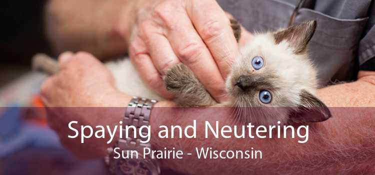 Spaying and Neutering Sun Prairie - Wisconsin