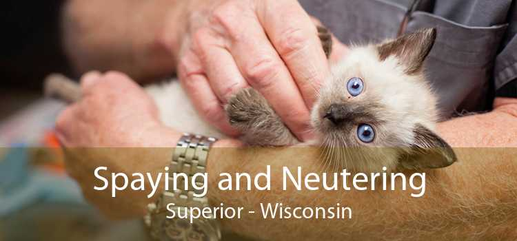 Spaying and Neutering Superior - Wisconsin