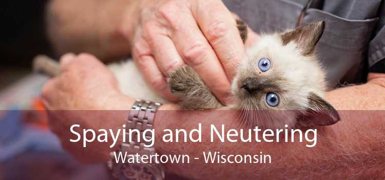 Spaying and Neutering Watertown - Wisconsin