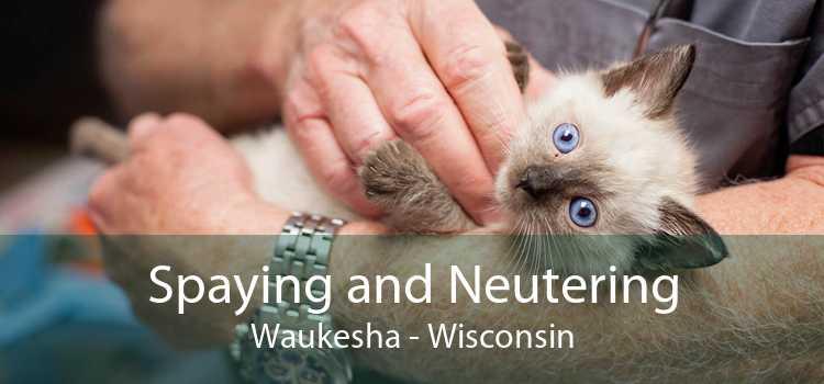 Spaying and Neutering Waukesha - Wisconsin