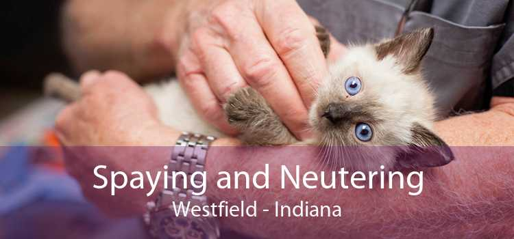 Spaying and Neutering Westfield - Indiana