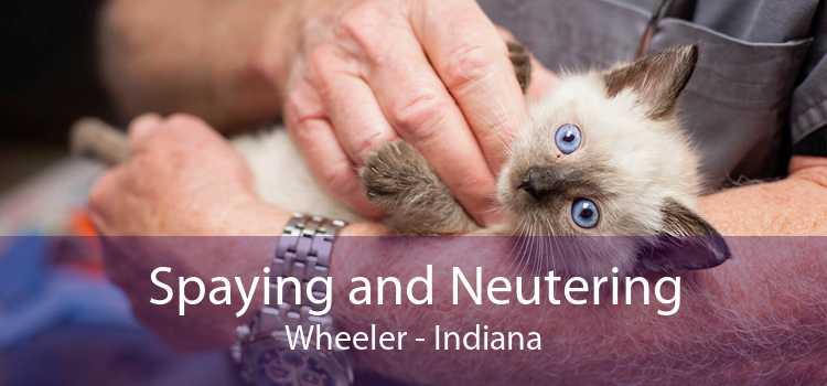 Spaying and Neutering Wheeler - Indiana