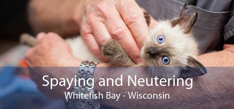 Spaying and Neutering Whitefish Bay - Wisconsin