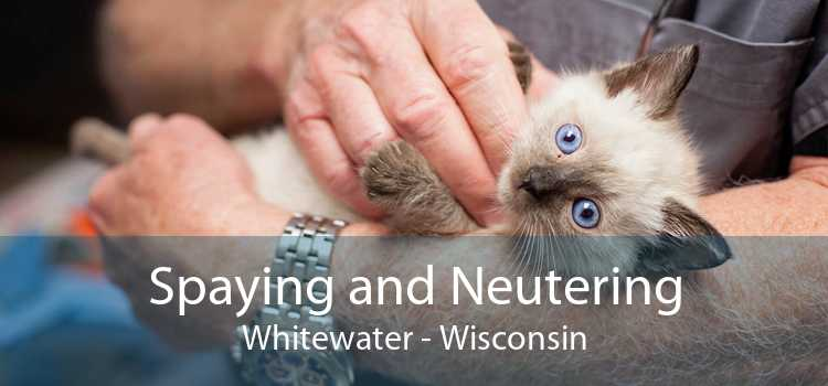 Spaying and Neutering Whitewater - Wisconsin