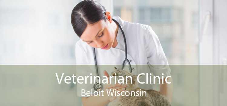 Veterinarian Clinic Beloit Wisconsin