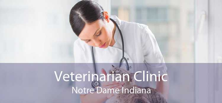 Veterinarian Clinic Notre Dame Indiana
